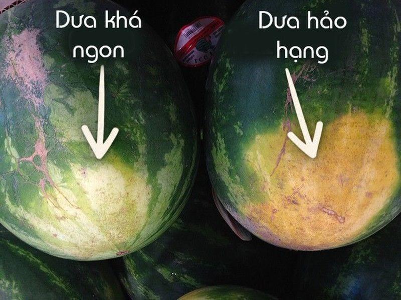 Phần đáy quả dưa hấu